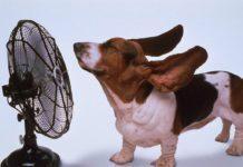 caldo cane