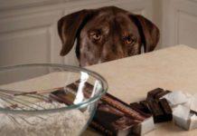 cane e cioccolato