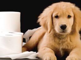 diarrea cani