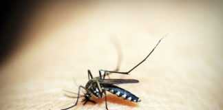 zanzara