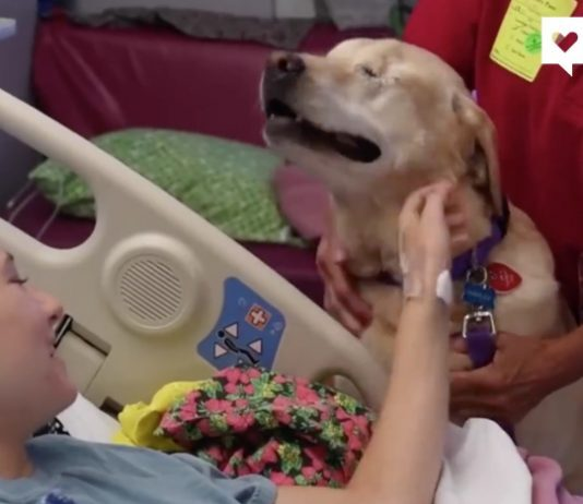 cane-pet-therapy