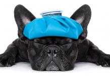 influenza-cane