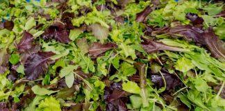 insalata-mista-capricciosa