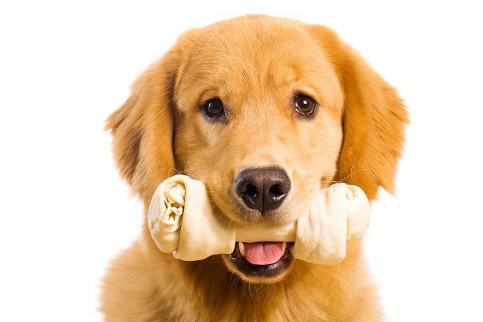 torsione dello stomaco del cane