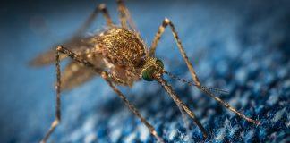 Cosa attira le zanzare? E perché pungono più persone che altre? Le risposte della scienza
