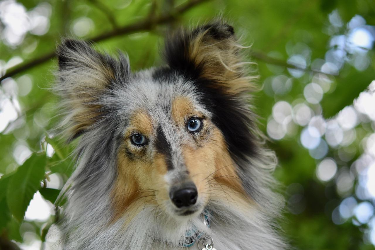 cane femmina che monta